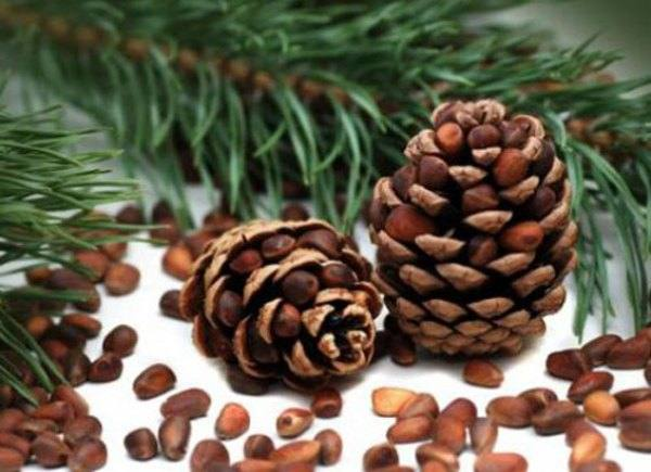 Классификация и разновидности орехов